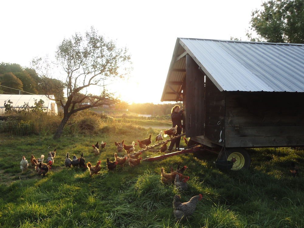 Semester Blog 3: Regenerative Agriculture and Crafting
