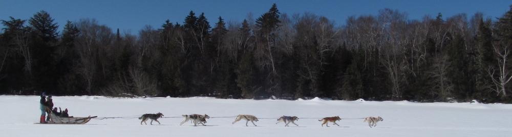 Community School Spring 2021: Dogsledding!
